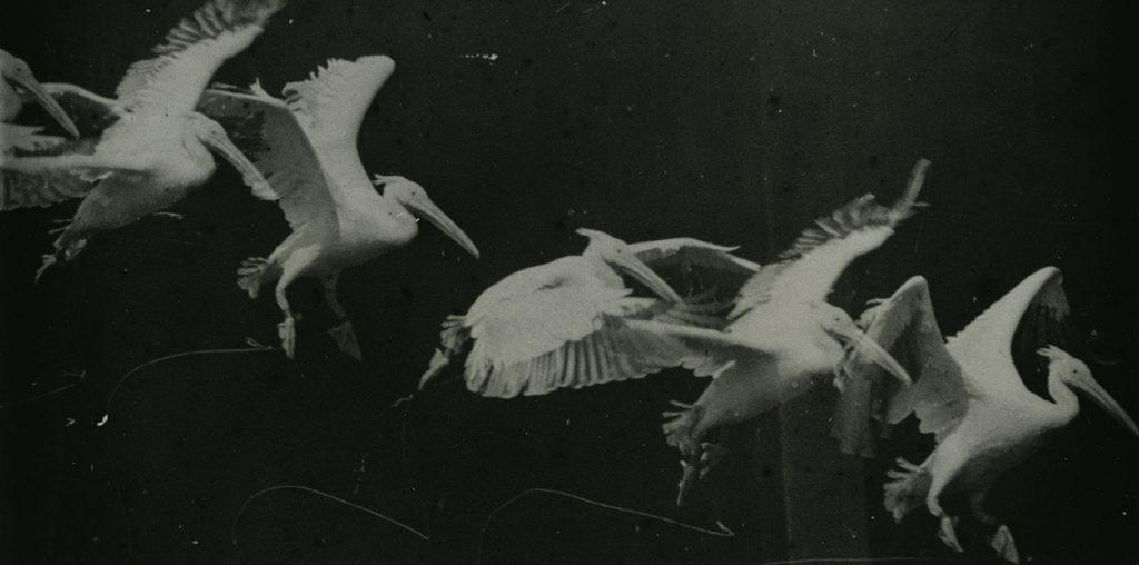 mareybirds